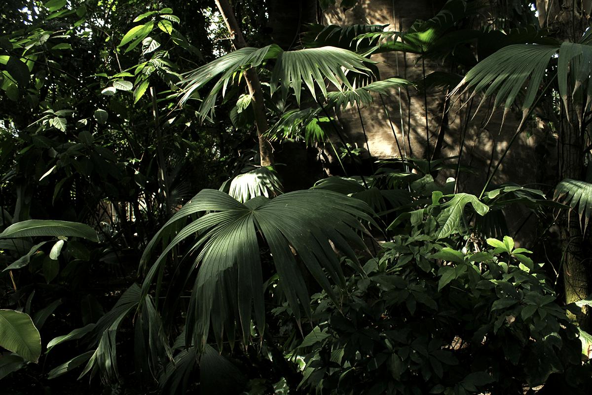 Garten Im September berlin botanischer garten an einem sonntag im september