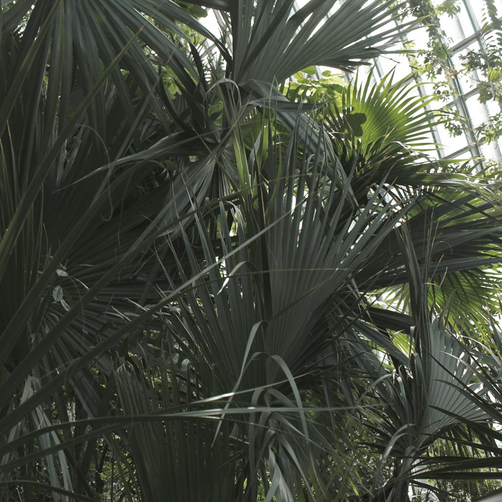 Palme Tropenhaus Botanischer Garten