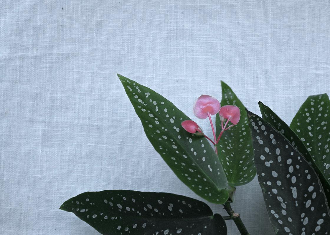 Die 5 besten Zimmerpflanzen für Anfänger