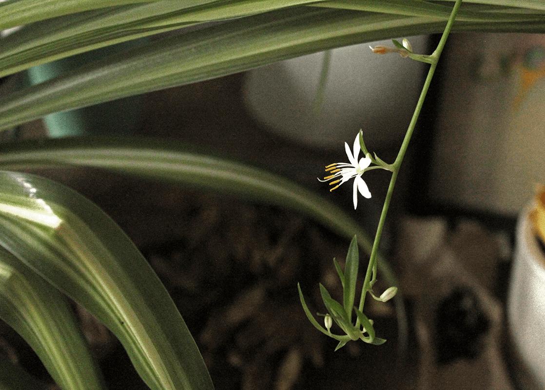 3 pflegeleichte Zimmerpflanzen für Anfänger – und 2 Pflanzen, von denen du besser die Finger lässt