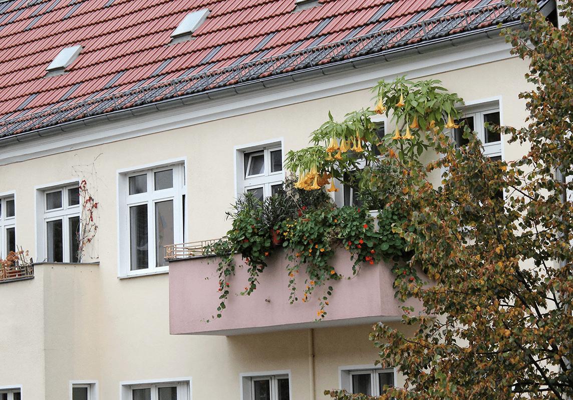#balkonziele, Neujahrsvorsätze oder Du sollst nicht neiden deines Nächsten Grün