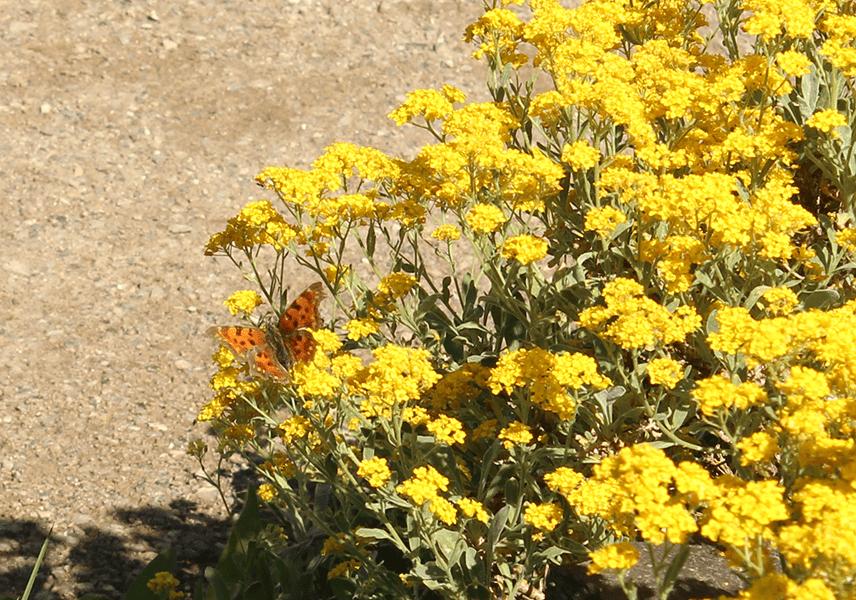 Schmetterling Botanischer Garten Berlin
