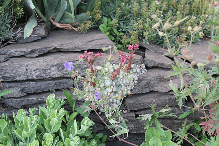 Pflanze Des Monats Juni Die Nacht Der Seerose Faunundfarnde
