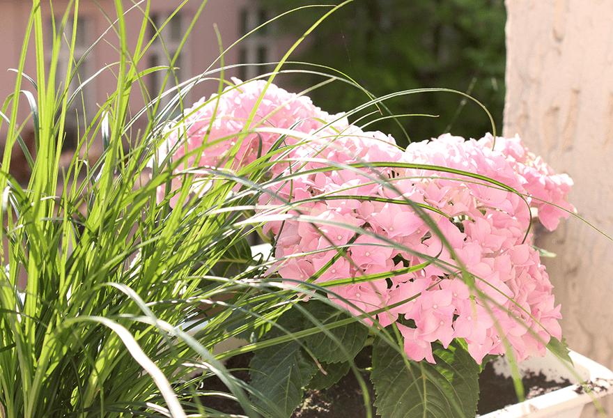 5 Dinge, die auf meiner Pflanzen-Ta-Da-Liste stehen und die du auch sein lassen solltest