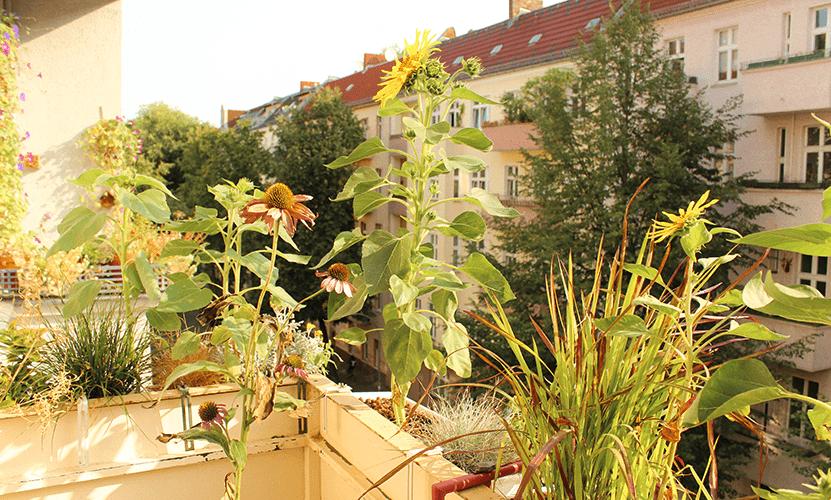 Tipps für deinen Balkongarten: Kurzanleitung und 5 Grundregeln, die deinen Balkon sofort schöner machen