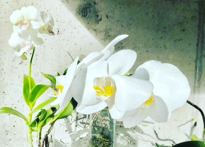 Das Orchideen-Experiment: Orchideen in Wasser kultivieren – Buch-Rezension